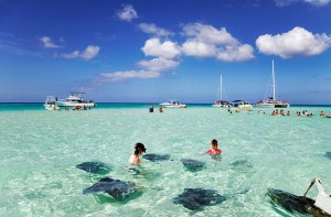 cayman-islands-stingray-city