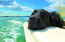 Protect-Your-Boat-from-Pets-When-You-Install-Foam